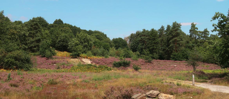 Wandelen in Nationaal Park Hoge Kempen : Mechelse Heide