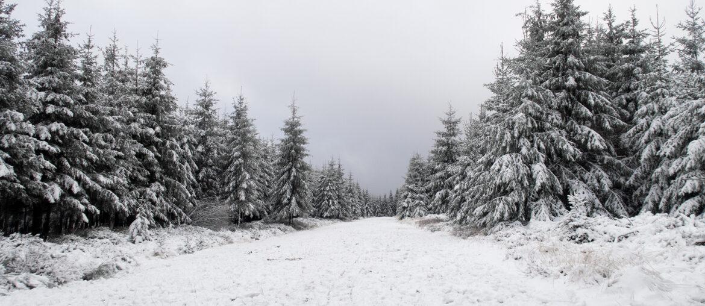 Wandelen in de sneeuw : Hoge Venen
