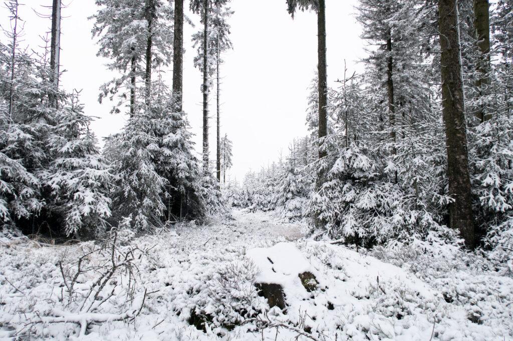 De Hoge Venen in de sneeuw